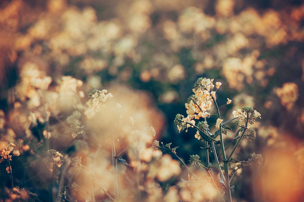 Understanding Pollen Counts
