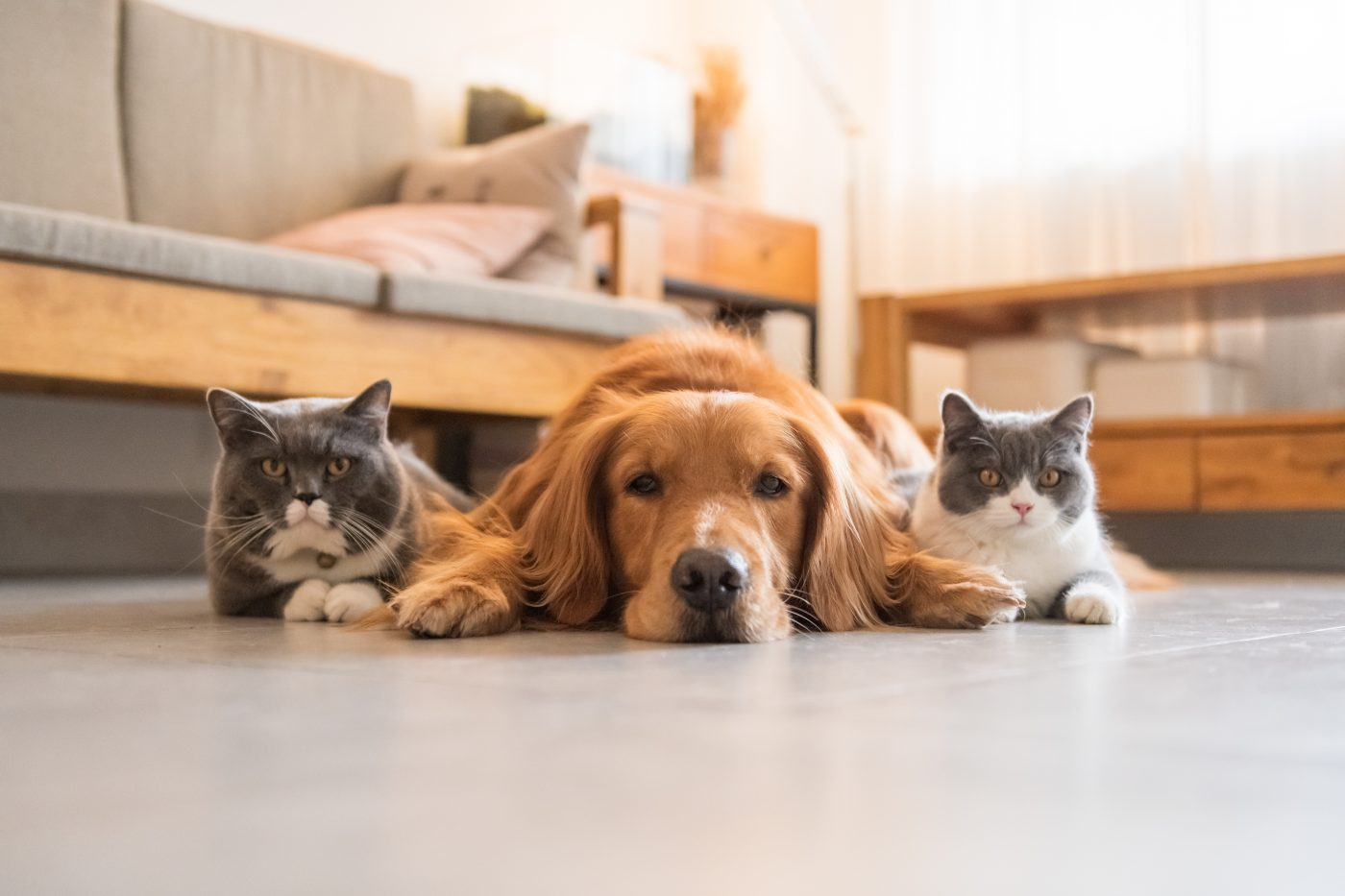 Living With Animals and Allergies - AsthmaNC